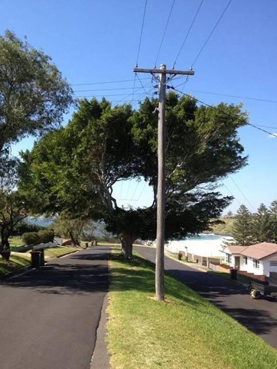 Modern tree